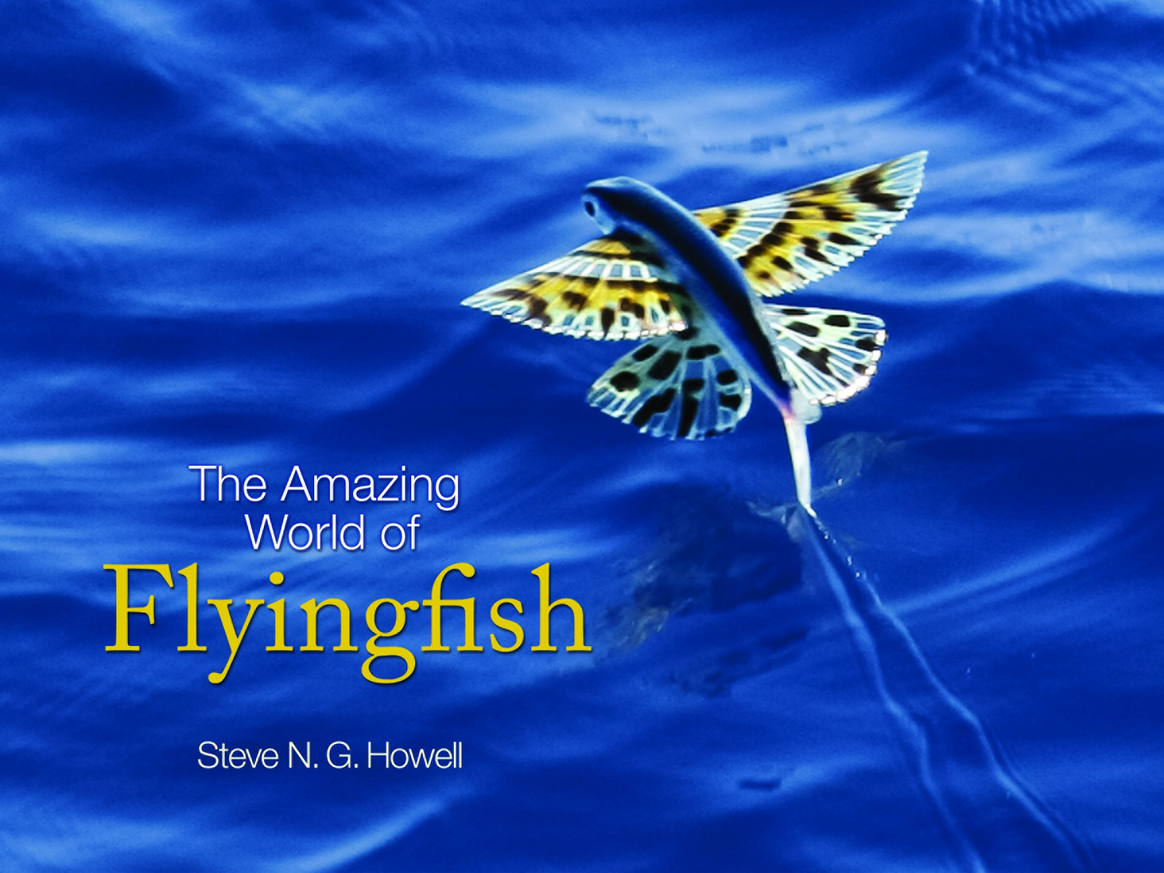 10 gorgeous books on beautiful fish now beautifulnow for The flying fish